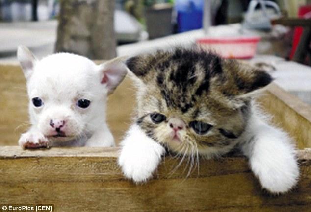 O cão é bem diferente de seus irmãos. (Foto: Reprodução / Daily Mail UK)