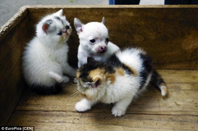 O cãozinho e dois irmãos felinos. (Foto: Reprodução / Daily Mail UK)