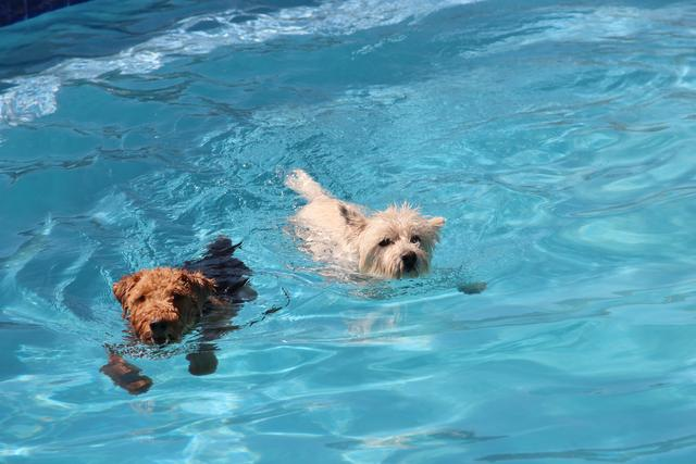 cachorro-nadando-02