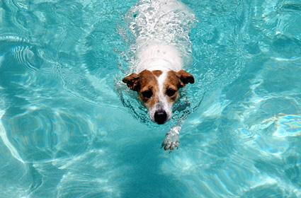 cachorro-nadando-06