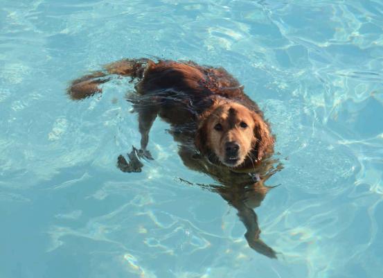 cachorro-nadando-08