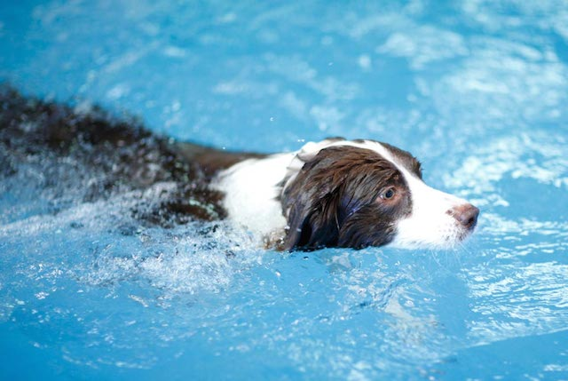 cachorro-nadando-10