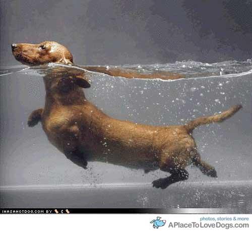 cachorro-nadando-13