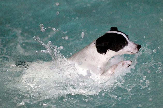 cachorro-nadando-14
