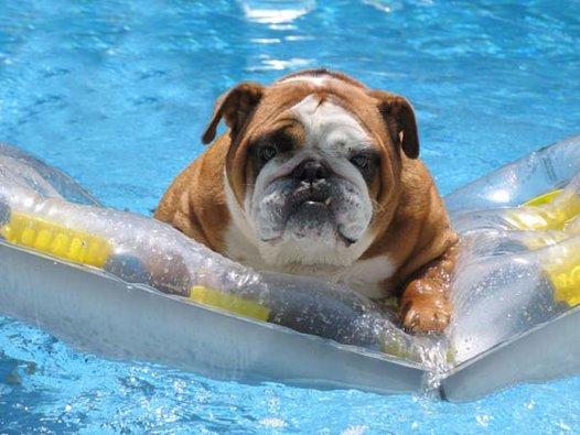 cachorro-nadando-17