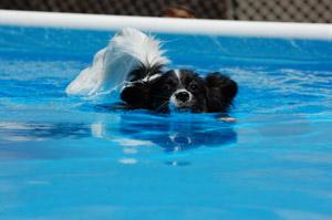 cachorro-nadando-20
