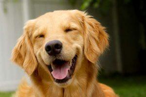 Os tutores garantem que seus cão sorriem. (Foto: Reprodução / Google)
