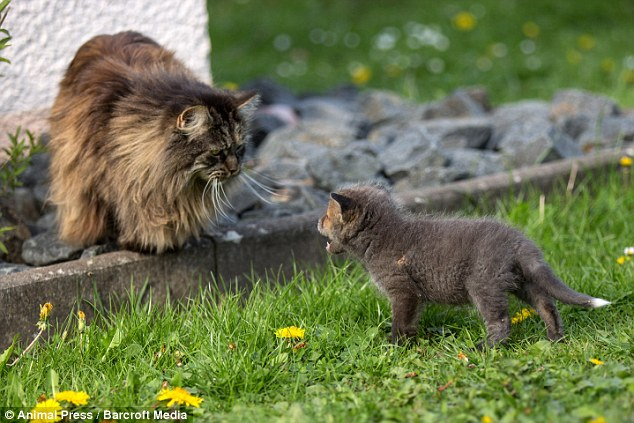 O gato Leopold e o filhote  Dinozzo formam uma amizade diferente. (Foto: Reprodução / Daily Mail UK)