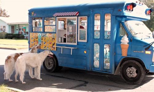 Os cães também merecem um evento gastronômico! (Foto ilustrativa: Reprodução / Facebook / Cãomida de Rua do Grande ABC)