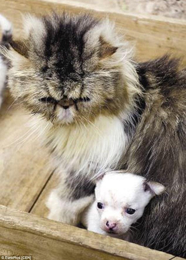 A gata Niuniu e seu filhote de cachorro. (Foto: Reprodução / Daily Mail UK)