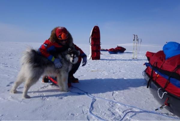 O husky siberiano Kimnik é um sobrevivente. (Foto: Reprodução / Tech Times)