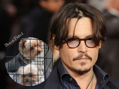Foto: Reprodução. Montagem: Portal do Dog