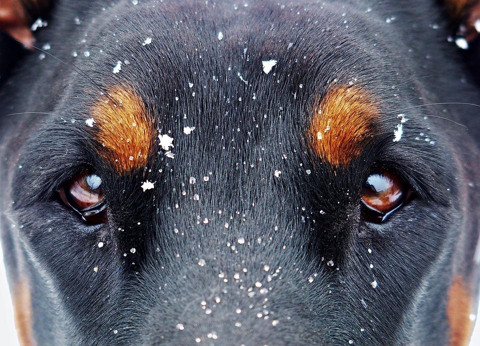 olhos do cachorro