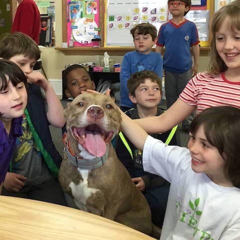 As crianças adoram o pit bull. (Foto: Reprodução / Facebook)