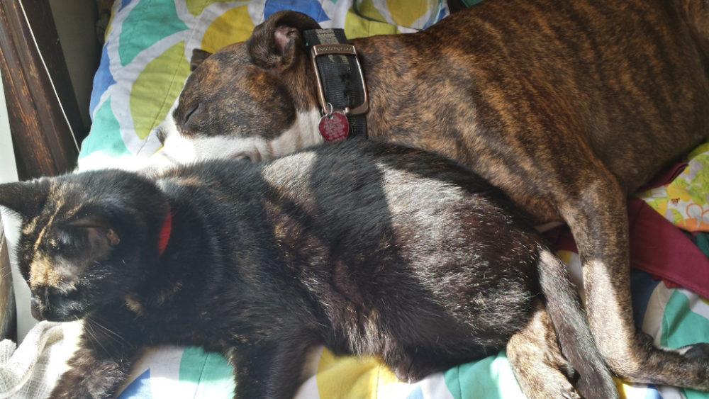(Foto: Reprodução / I Heart Dogs)