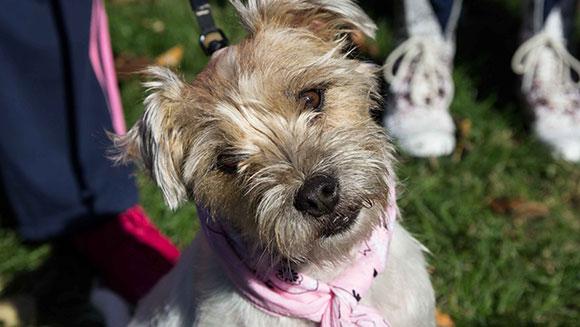 Muitos cães usando bandana compareceram ao evento. (Foto: Reprodução /  Guinness World Records)