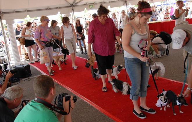 O maior casamento coletivo de cachorros. (Foto: Reprodução / Guinness World Records)