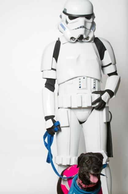 star-wars-dog-02