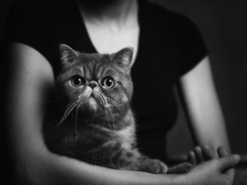 Foto: Vincent Legrance