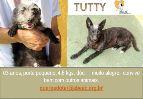 (Foto: Divulgação / Facebook / Abeac)