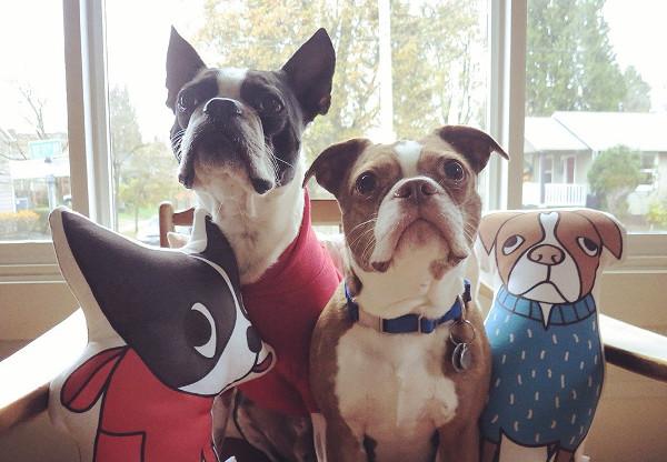 Almofada com ilustrações personalizadas do seu pet. (Foto: Reprodução / Dog Milk)