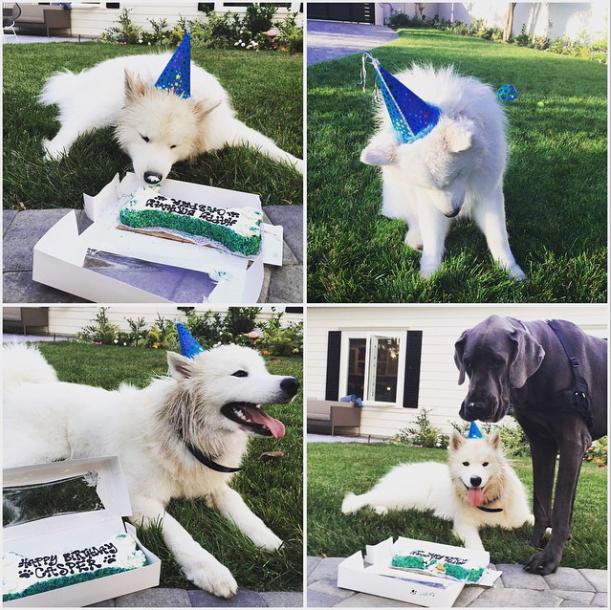 Casper devorou seu bolo de aniversário. (Foto: Reprodução / Instagram)