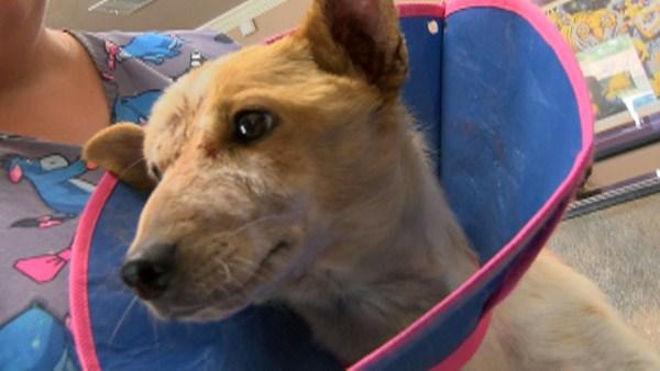 Maggie já está se recuperando. (Foto: Reprodução / CBS 46)