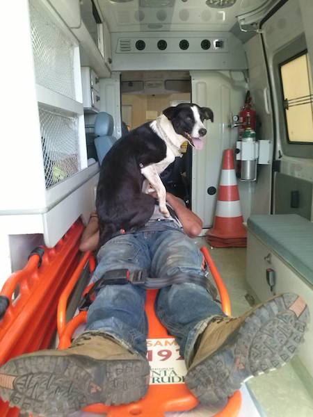 A cadela acompanhou seu tutor até o hospital. (Foto: Reprodução / Facebook / Alves Jefferson)