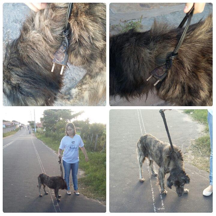 O cão foi abandonado com um fio elétrico amarrado no pescoço. (Foto: Reprodução / Facebook / ONG 7 Vidas)