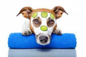 Cachorros também têm acne. (Foto: Reprodução / Google)