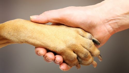 A lealdade dos cães é surpreendente. (Foto: Reprodução / Google)