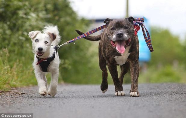 Glenn (esquerda) sendo guiado pelo amigo Buzz (direita). (Foto: Reprodução / Bark Post)