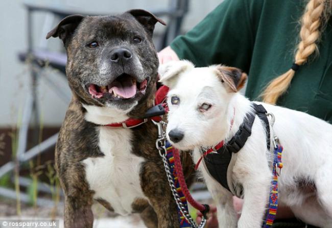 Os dois são inseparáveis. (Foto: Reprodução / Bark Post)