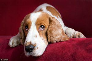 Cachorros sofrem com a nossa rotina agitada. (Foto: Reprodução / Daily Mail)
