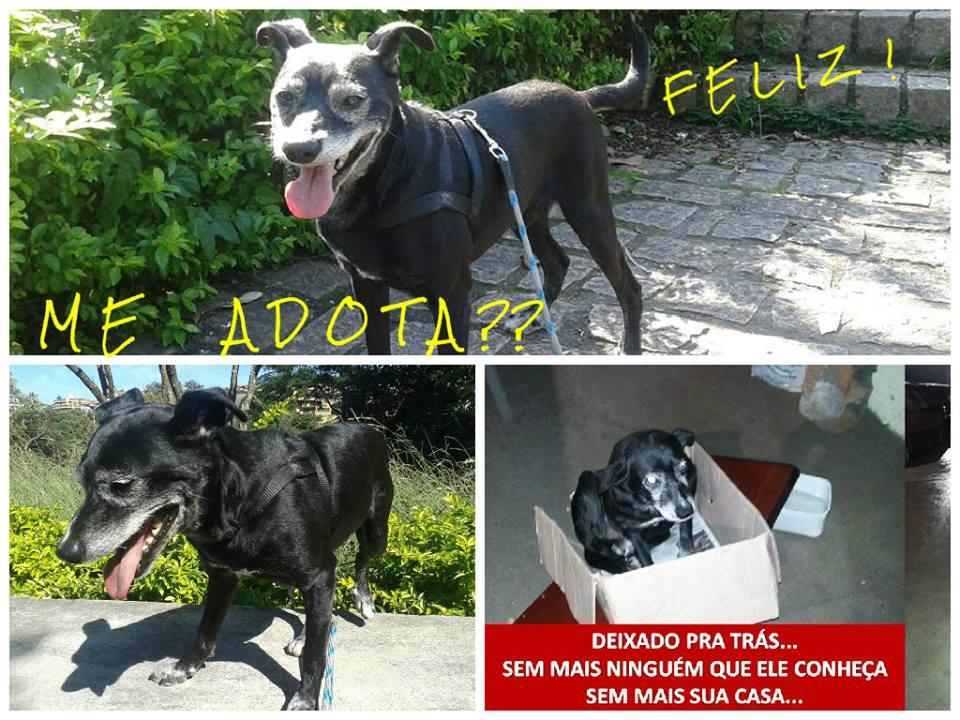 O cachorro Negão está esperando para ser adotado. (Foto: Divulgação / Facebook / Adotar Animal)