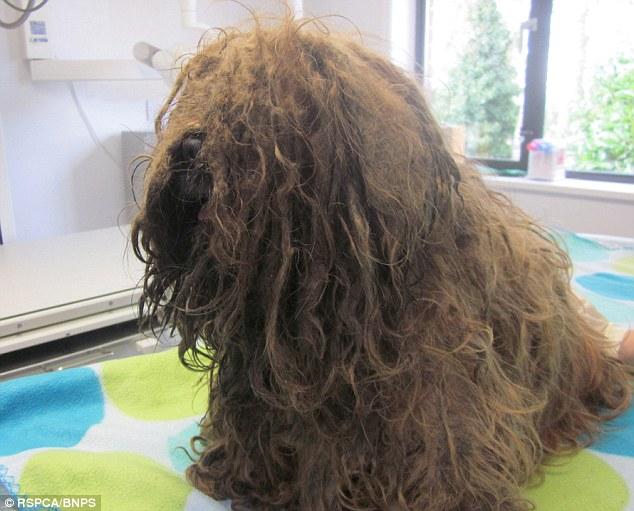 O cão Happy foi encontrado em situação deplorável. (Foto: Reprodução / Daily Mail UK)