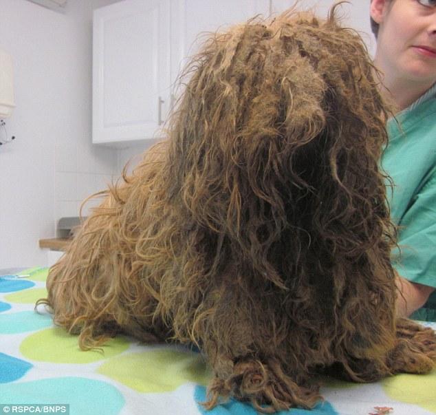 A veterinária não deu os cuidados que o shih tzu precisava. (Foto: Reprodução / Daily Mail UK)