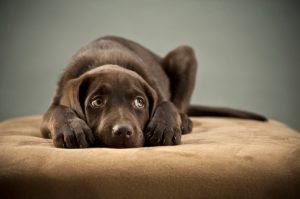 Alguns cães são mais inseguros do que outros. (Foto: Reprodução / Google)