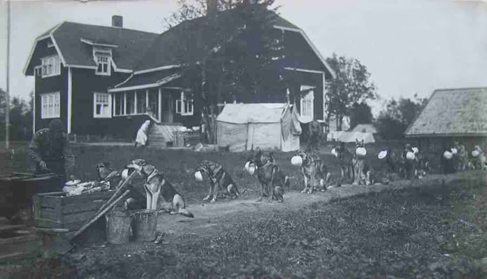 Foto de 1940 mostra cães policiais da Finlândia.  (Foto: Reprodução / Bored Panda)