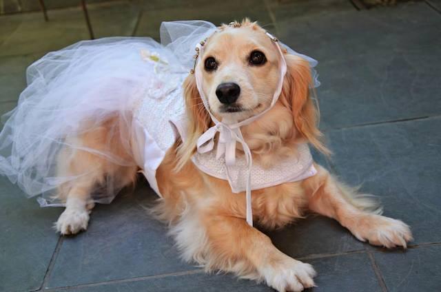 A noiva da festa! (Foto: Divulgação)