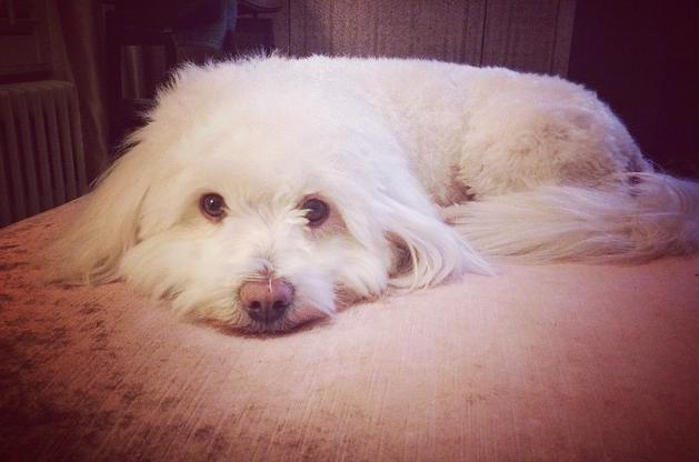 Se antes vivia nas ruas, agora o cachorro é muito bem cuidado. (Foto: Reprodução / Instagram)