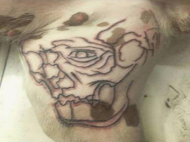A tatuagem na parte interna da perna da pit bull Penélope. (Foto: Reprodução / Instagram)