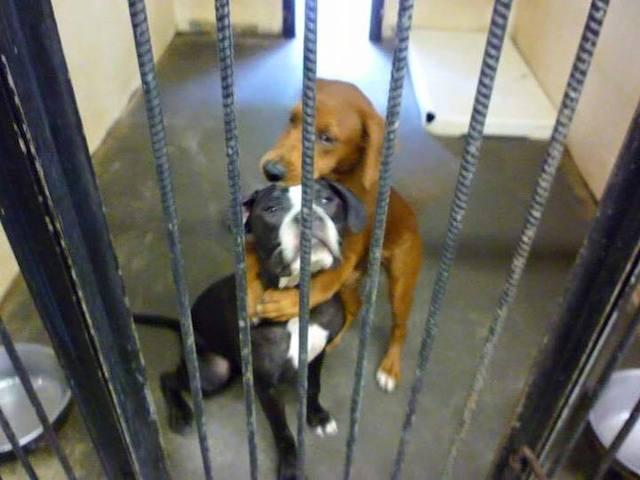 Kala abraçando Keira. (Foto: Reprodução / Facebook / Angels Among Us Pet Rescue)