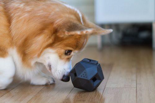 """Cachorro brincando com essa """"bolinha diferente"""". (Foto: Reprodução / Dog Milk)"""