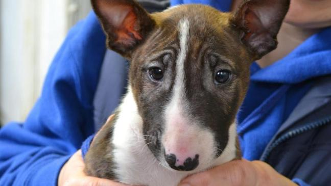 A cachorra Matilda nasceu hermafrodita. (Foto: Reprodução / Bark Post)