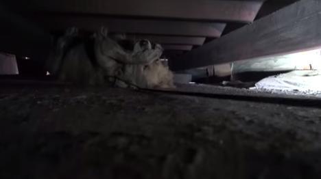 Clarabelle estava tão assustada que cobriu os próprios olhos.(Foto: Reprodução / Youtube / Hope for Paws)