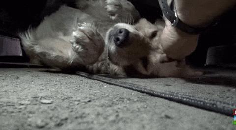 A cachorra é muito boazinha. (Foto: Reprodução / Youtube / Hope for Paws)