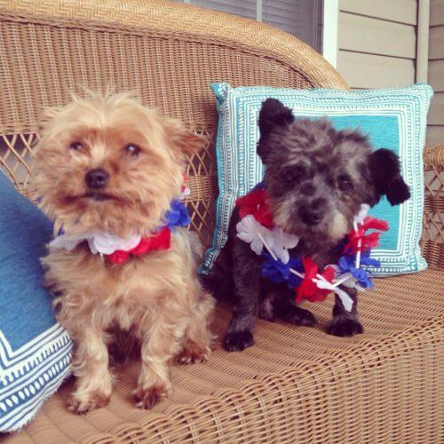 Chester (direita) com o outro cachorro de Nicole, Pierre (esquerda). (Foto: Reprodução / Facebook)