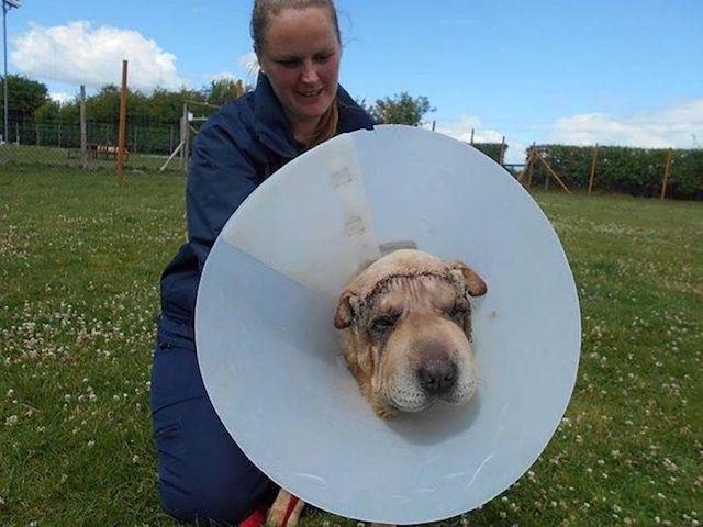 Benny está se recuperando da primeira cirurgia. (Foto: Reprodução / Metro UK)