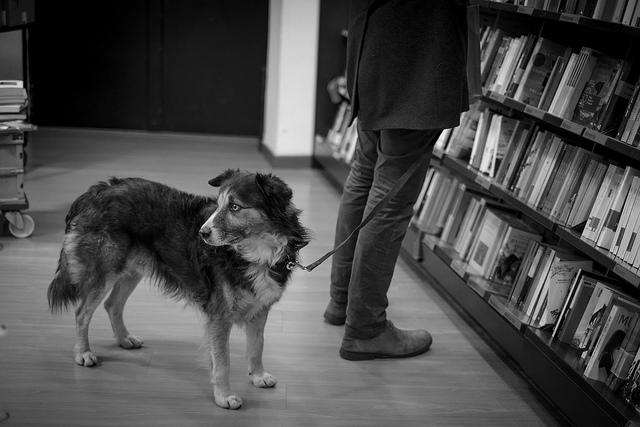 Identificar o medo é o primeiro passo para ajudar seu cachorro.(Foto: Reprodução / I Heart Dogs)